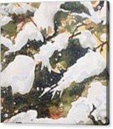 A Gray Jay Kind Of Day Acrylic Print