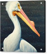 A Great White American Pelican Acrylic Print