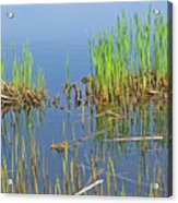 A Greening Marshland Acrylic Print