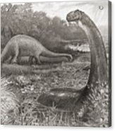 A Group Of Brontosaurs, Or Thunder Acrylic Print