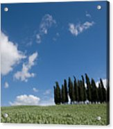 A Group Of Cypress Trees Dot A Tuscan Acrylic Print