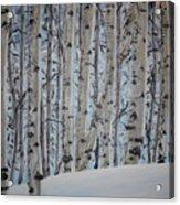 A Grove Of Aspens Acrylic Print