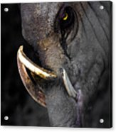 A Handsome Chap Acrylic Print