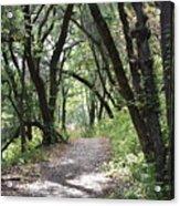 A Happy Trail Acrylic Print