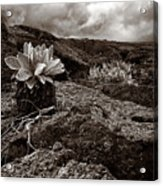 A Hard Existence - Sepia Acrylic Print