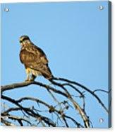 A Hawks Eye View Acrylic Print