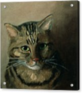 A Head Study Of A Tabby Cat Acrylic Print