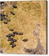 A Herd Of 100+ Elephants, Sw Corner Acrylic Print