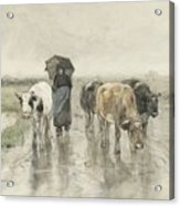 A Herdess With Cows On A Country Road In The Rain Acrylic Print