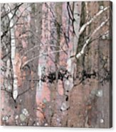 A Hint Of Pink Acrylic Print