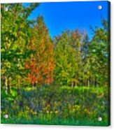 A Hint Off Fall Acrylic Print