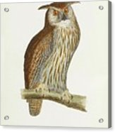 A History Of British Birds. Acrylic Print