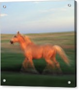 A Horse At Sandal Ranch Near Howes Acrylic Print