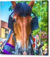 A Horse Of Course Acrylic Print