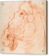 a Horse's Head Acrylic Print
