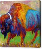 A Journey Still Unknown - Bison Acrylic Print by Marion Rose