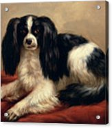A King Charles Spaniel Seated On A Red Cushion Acrylic Print