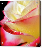 A Kiss Of Dew Acrylic Print