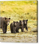 A Large Family Acrylic Print by Tim Grams