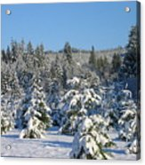 A Light Snow Dusting Acrylic Print