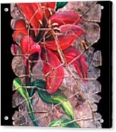 A Lily Fresco Acrylic Print