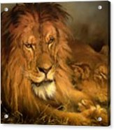 A Lion And A Lioness Acrylic Print