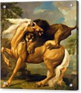 A Lion Attacking A Horse Acrylic Print