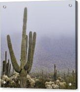 A Little Desert Fog  Acrylic Print