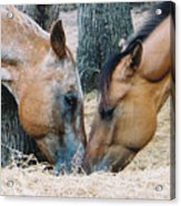 A Little Kiss Acrylic Print