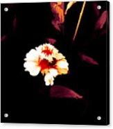 A Little Marigold Acrylic Print
