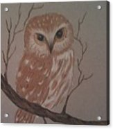 A Little Owl Acrylic Print by Ginny Youngblood