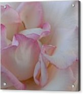 A Little Pink Around The Edges Acrylic Print