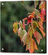 A Little Rain Must Fall Acrylic Print