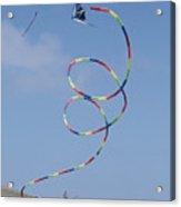 A Long-tailed Kite Soars Acrylic Print