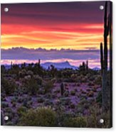 A Magical Desert Morning  Acrylic Print