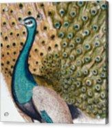 A Male Peacock In Full Display, 1763 Acrylic Print