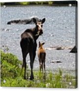A Mom And Her Baby Acrylic Print
