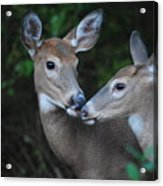 A Moms Touch Acrylic Print