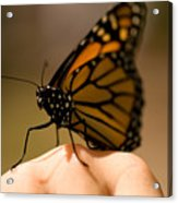 A Monarch Butterfly At The Butterfly Acrylic Print