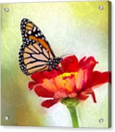 A Monarch Moment Acrylic Print