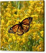 A Monarch World Acrylic Print