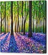 A Morning Walk Through Bluebells Acrylic Print