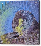 A Mossy Rock  Acrylic Print