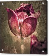 A Mother's Day Card Acrylic Print