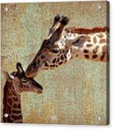 A Mother's Kiss Acrylic Print