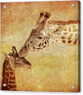 A Mother's Kiss Painted 2 Acrylic Print