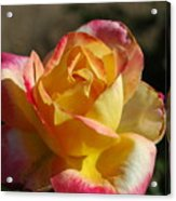 A Natural Beauty Acrylic Print