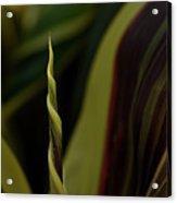 A New Leaf Is Born Acrylic Print