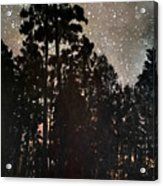 The Forest Night Acrylic Print