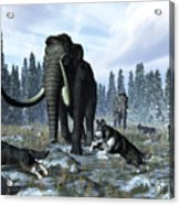 A Pack Of Dire Wolves Crosses Paths Acrylic Print